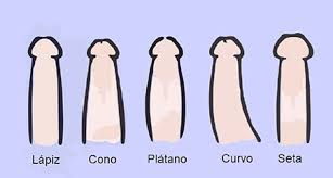 tipos de penes